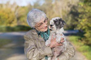 Over50s Pet Insurance