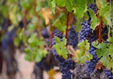Top Three vineyards in the UK